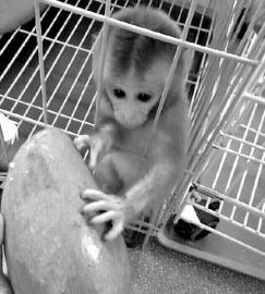 """卖家晒出的""""石猴""""照片B26"""