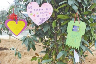 """滚动新闻  原标题:""""人人行动绿色开封"""" 青少年植树寄托希望和幸福"""