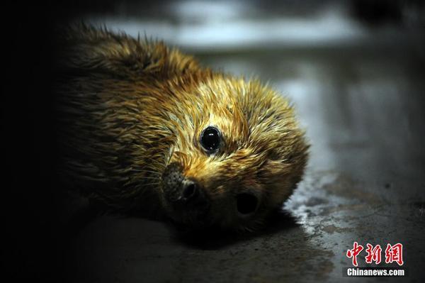 武汉斑海豹幼崽憨态可掬萌动可爱