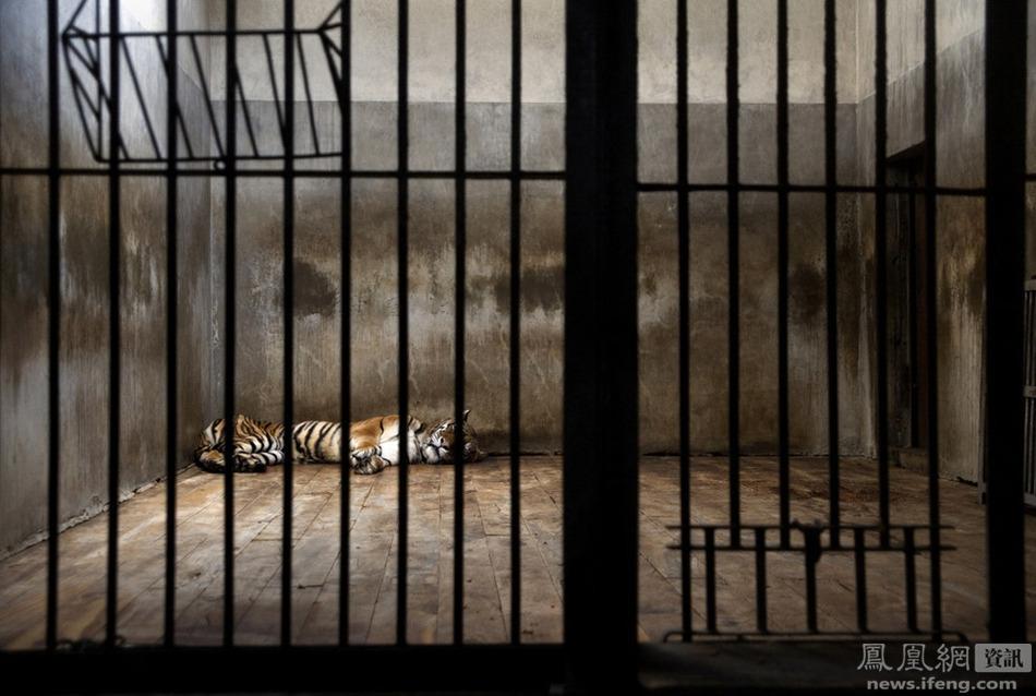 被关在笼子中的动物