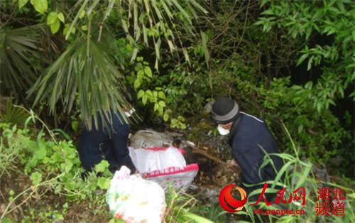 新闻跟踪 湖北咸丰对省道死猪死狗进行无害化处理