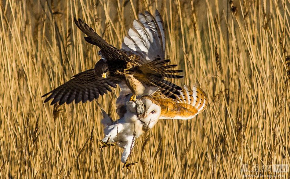动物之间的争斗