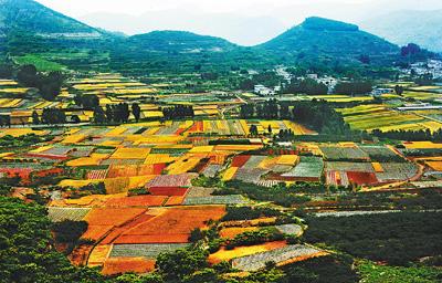壁纸 成片种植 风景 植物 种植基地 桌面 400_256