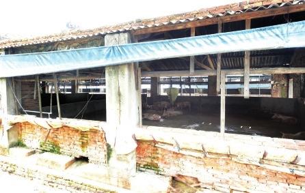 养猪场内,养了大大小小三四千头生猪-镇政府 该猪场已列入拆除计划