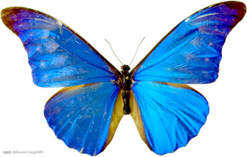 蝴蝶项链折纸步骤图解