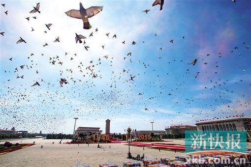 7万羽和平鸽展翅高飞.