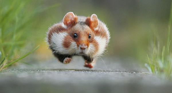 下有野生动物摄影奖跳舞松鼠练功狐猴曝光蚂蚁入围夫梦到自己床奇趣黑作品图片