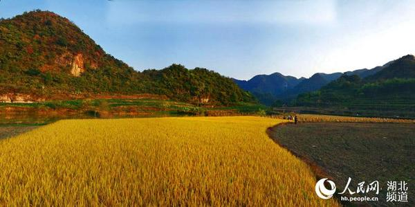 山区农民正在收稻谷