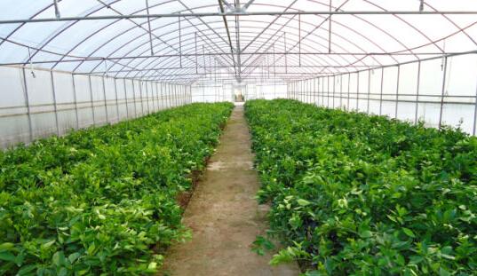 资料图:蔬菜大棚. 图片与本文无关-连续寡照影响蔬菜生长怎么办 气高清图片