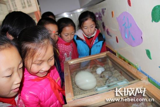 保护野生动物宣传月 石家庄小学生倡议:拒食野生动物