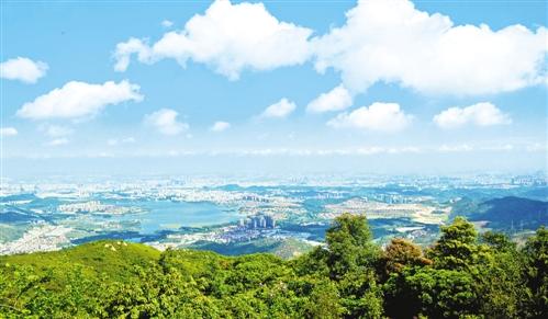 城市拥抱森林 绿色美化生活