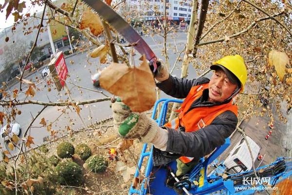园林工人正在修剪树木。 长城网秦皇岛12月10日讯(记者 祖迪 通讯员 曹建雄)秦皇岛海港区园林局抓住冬季树木进入生长休眠期的有利时机,自12月初开始至明年3月中旬树木萌动返青前,全面对市区主干道行道树进行整形修剪,计划将完成一千余株树木的整形修剪工作。 据悉,此次次集中修剪,可增强树木的通风透光,减少明年病虫害的发生;还可提高行道树造型美观,从而提升城市园林绿化景观效果。