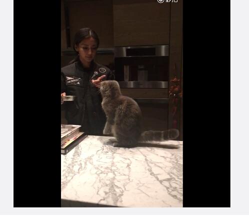Angelababy素颜喂猫 小猫听英文指令乖乖坐下