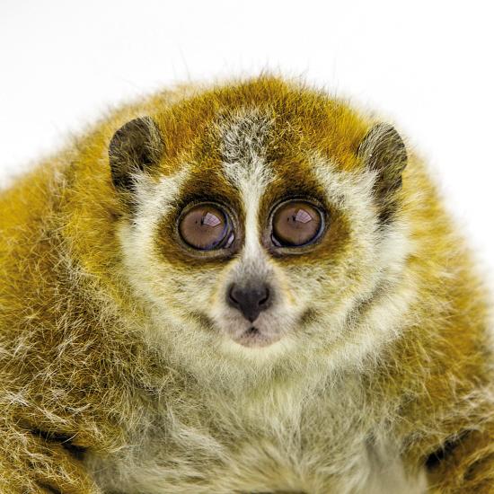 这些猴类(灵长类很多动物都俗称猴类)都是从原产地依法引进的,包括猴