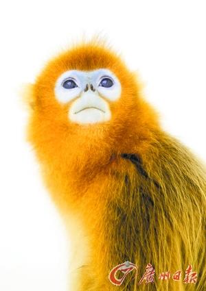 在广州能看到品种繁多的猴子.