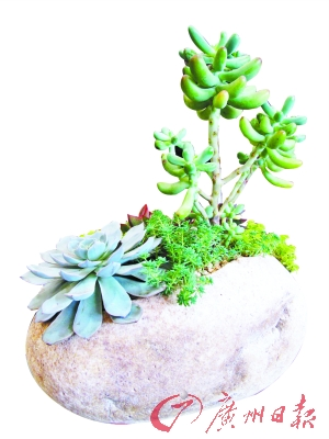石头盆栽。