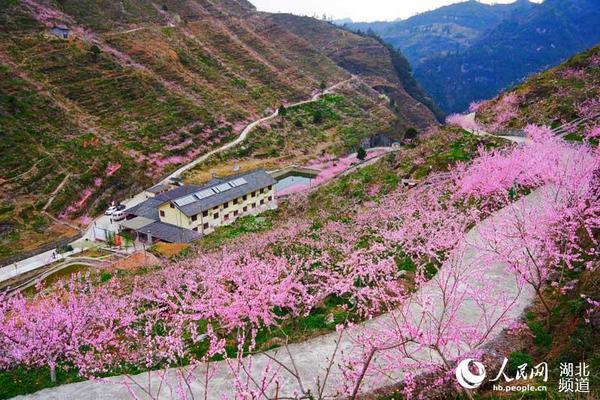 虽然山高路窄,当天去樟村坪镇桃花寨有近千名游人及当地村民.