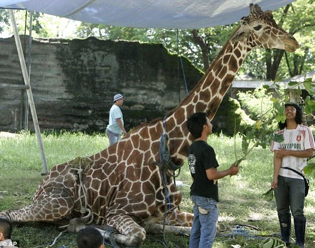 曝光印尼恶劣的动物园 长颈鹿胃含塑料垃圾(1/9)