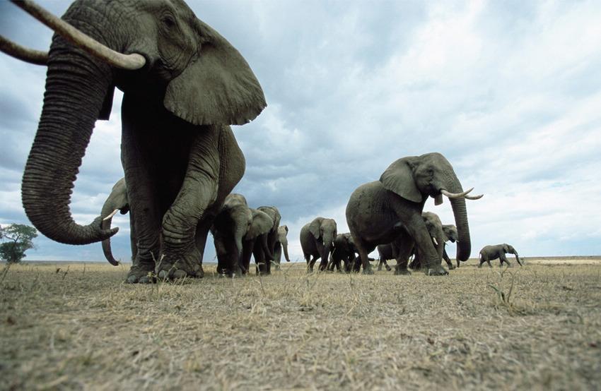 蔚为壮观野生动物大迁徙
