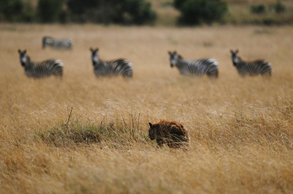 东非野生动物大迁徙 一起见证奇迹