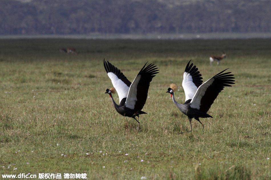 艳夏肯尼亚动物大迁徙正当时 动物才是这里的主人