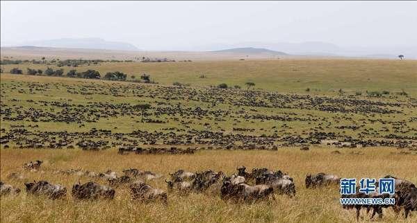 非洲角马大迁徙