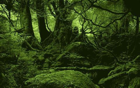 巴西在亚马孙热带雨林发现169个新物种