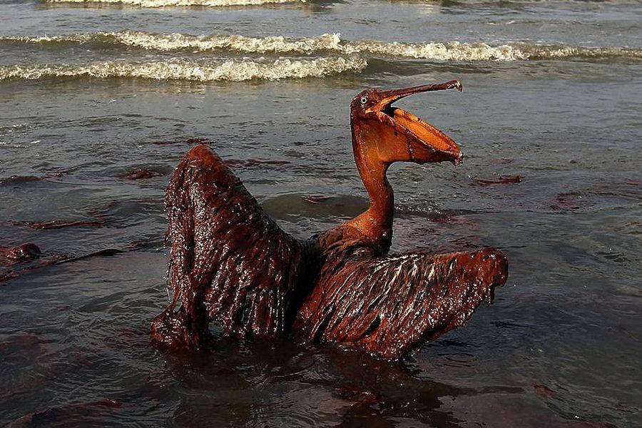 海湾战争期间,多国部队投放300吨贫铀弹,炸毁伊拉克大批炼油厂和化工厂,使得战后伊拉克儿童癌症患病率提高4倍。战争造成200万桶原油泄漏, 形成长80公里,宽19公里的油带, 使海洋生物遭致灭顶之灾。灾难性环境污染,至今依然在持续。