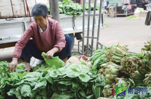 """7月以来,受干旱、暴雨等极端天气的影响,我市蔬菜整体价格不断上涨,其中叶类蔬菜价格与去年同期相比,涨幅惊人。香菜15元/斤的零售价格比猪肉还贵,10元钱的茼蒿不够仨人吃,市民直喊""""菜篮子""""太沉。就此现象,记者连续两天深入采访了买卖双方、种植基地及监测部门,了解情况,追究原因,探寻走势。 本报记者王洋马依钒 菜价""""涨""""声一片 """"现在买两元钱的小白菜,还不够炒一盘的,去年这个时候两元钱可以买一两斤,真是上涨得厉害。""""近日,记者走访市区的"""