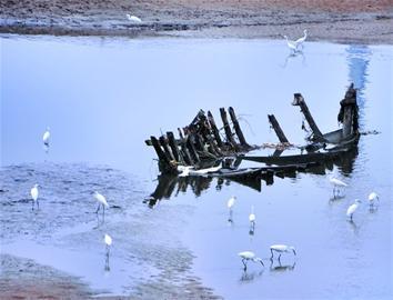 黄岛风河水美食丰数百只美食翩翩起舞成白鹭》《的·景观加里罗德图片
