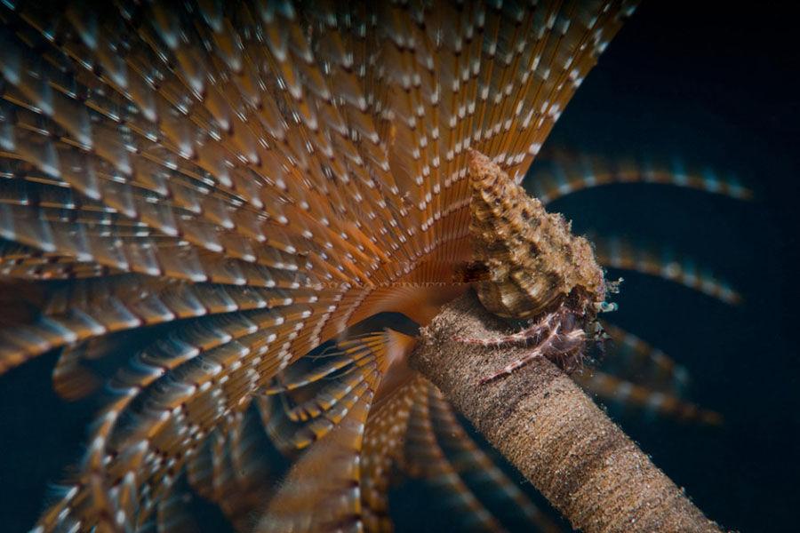 """这个在没有阳光的大洋深处、在超过沸点的海水里、在高压的深海环境下的生命系统被发现后,便立即成为生命形成和演化方面""""无法解答的复杂谜题""""。经科学家们调查,海底热泉附近的食物密度是惊人的,而且热泉内有大量细菌迅速繁衍。"""