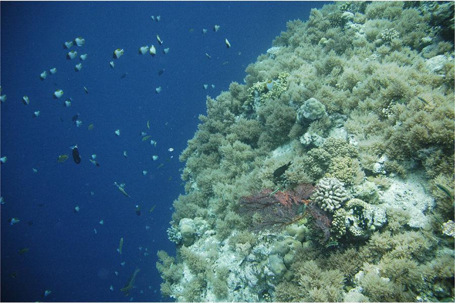 深海是指深度超过6000米的海域。世界上深度超过6000米的海沟有30多处,其中的20多处位于太平洋洋底,马里亚纳海沟的深度达11000米,是迄今为止发现的最深的海域。马里亚纳海沟的深度达11000米,是迄今为止发现的最深的海域。