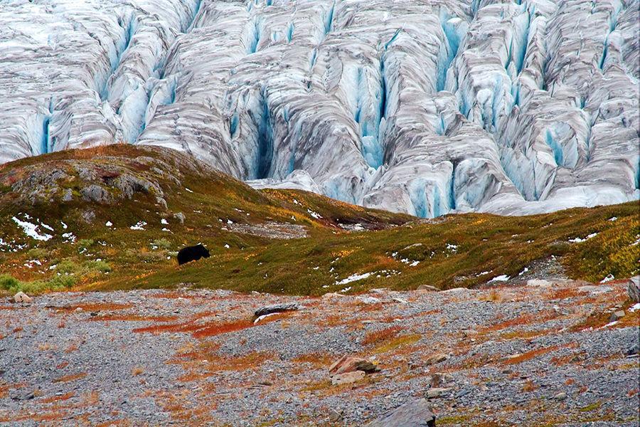 基奈峡湾(Kenai Fjords)国家公园,在此可以领略因冰川消退而形成的壮美风光。海岸线上遍布岩石嶙峋的峡湾和半岛。基奈峡湾(Kenai Fjords)展现了阿拉斯加南海岸的特色风光。崎岖地貌和丰富野生动物吸引着探险者们。这片土地呈现出一种粗犷、未加雕琢的面貌。