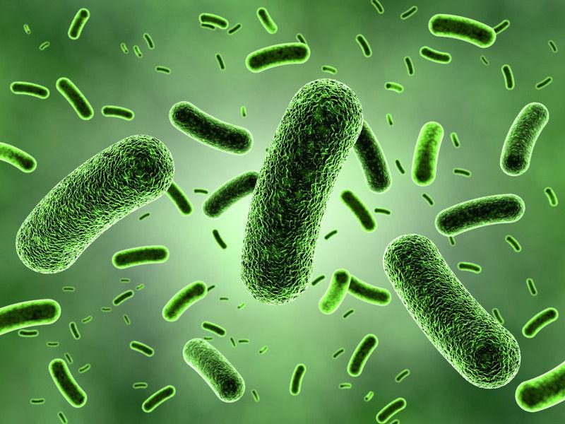 美科学家预防特定肠道细菌可发现食物过敏七元美食人气牛排十图片