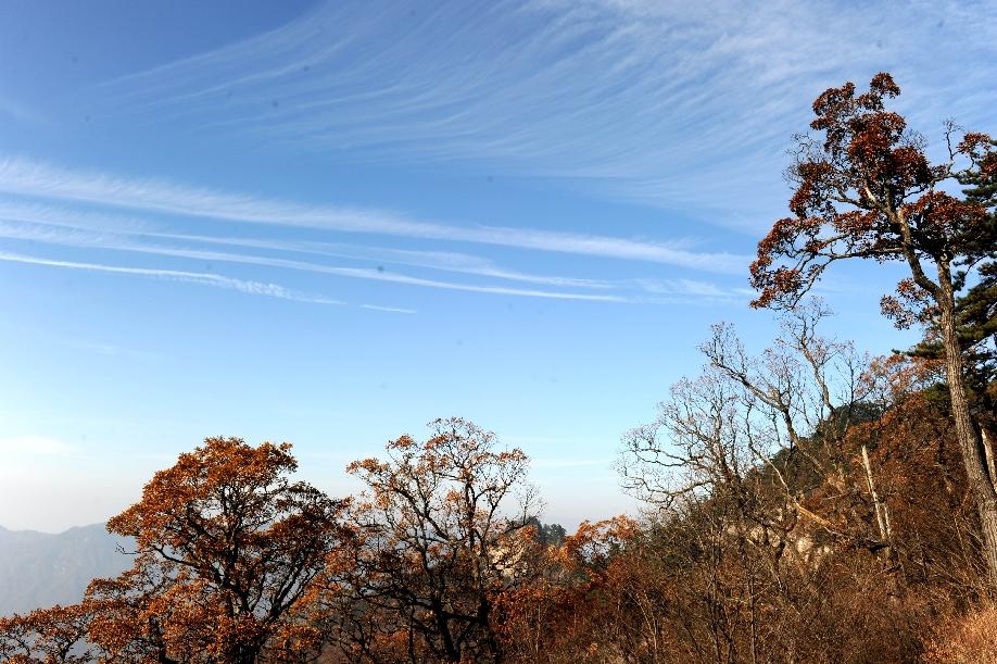 暖阳挥洒在山峦草木间,平添了一丝冷峻的色彩.( ) -初冬大别山