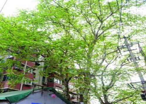 幼儿园环创松杨树枝