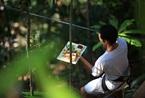 泰国树上筑鸟巢 独一无二的鲁滨逊式树上餐厅