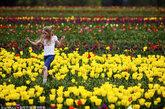 美国俄勒冈州Woodburn,木鞋郁金香农场鲜花盛开。该农场整个四月都对外开放,以40多英亩的郁金香花、漂游、品尝美食以及庆祝活动为特色。当地时间2012年4月10日,美国俄勒冈州Woodburn,6岁的Devonni Carman踮着脚尖穿过木鞋郁金香农场的花田。(图片来源:THOMAS BOYD/东方IC)