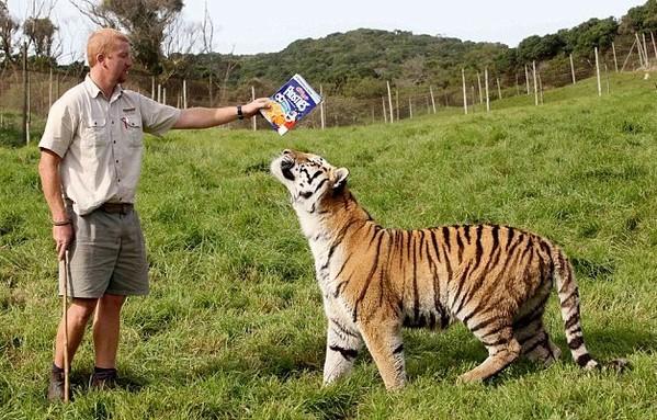 南非饲养员与老虎的感人友谊