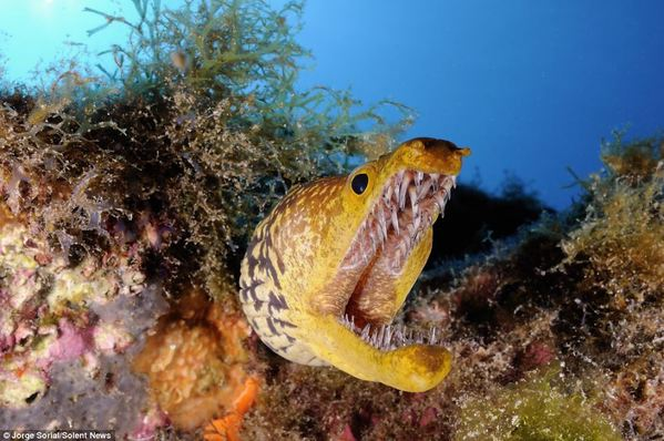 壁纸 海底 海底世界 海洋馆 水族馆 599_398
