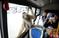 云南野生动物园开通专线公交 动物明星车上迎客