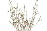 层叠茶杯造型花瓶    蓝色、绿色、白色的小茶杯叠放在一起,成为一个层叠的花瓶。插上娇艳的小花,仿佛能闻到春的芬芳。