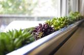 植物。英国《斯堪的纳维亚心理学杂志》近期发表的一项研究发现,卧室中摆放一些植物,如玫瑰等,能释放一种促进情绪的化学物质苯乙胺。还可以在床周围放一些薰衣草和百合,它们的芬芳能唤起男人的性欲。(实习编辑:温存)