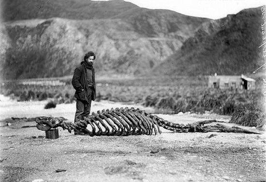 揭秘百年前科学家考察南极大陆的绝密照片