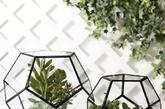 """这个叫""""花笼""""比较合适吧,罩在玻璃花盆中的多肉植物,还留一角""""天窗""""与主人交流,真叫人爱不释手。(实习编辑 孟璇)"""