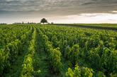 【6】勃艮第葡萄园,法国