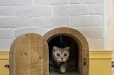 爱猫的人总是不吝于表达对猫咪的喜爱,例如为房子增加多项方便猫咪的设施,台湾好设计工作室提供的案例就是其中之一。这套LOFT有两处转为猫咪设计的设施,一个是双层窗台,一个是专给猫咪而设的小门。看着猫咪满足的样子,想来猫奴也十分欣慰吧。(编译:凤凰家居小杨)