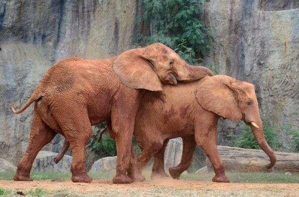 大象 动物 600_397