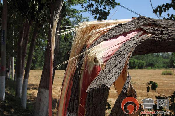 3万多人受灾,倒伏的农作物约4004公顷,损坏房屋41间,造成树木断裂3万