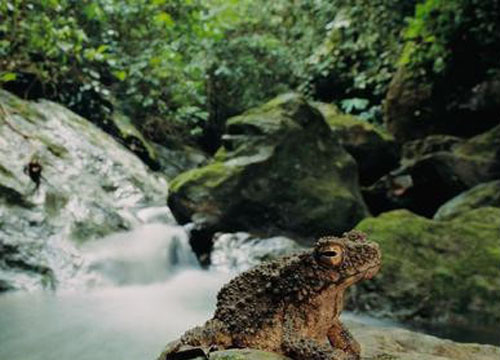 婆罗洲 热带雨林动物多